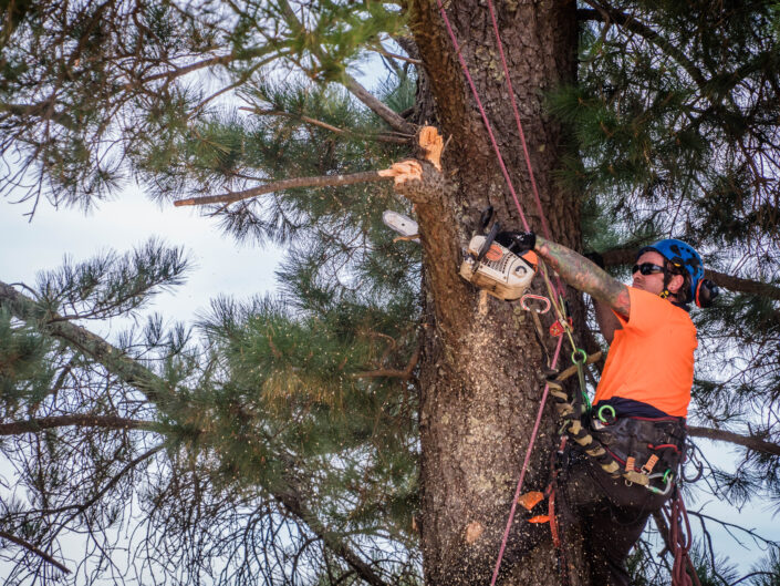 All Day Tree Services - Commercial Photography